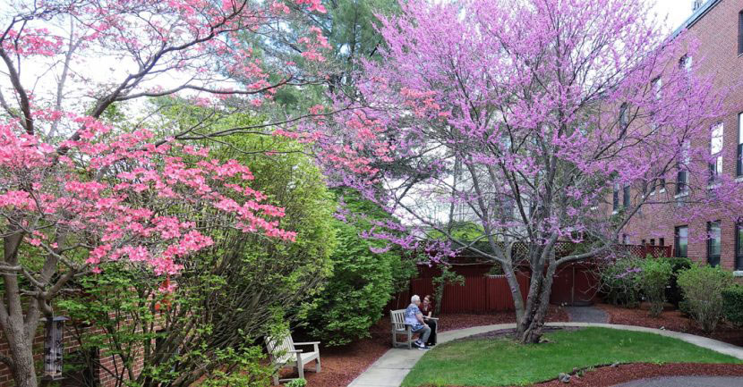 Courtyard Suites Blossoms